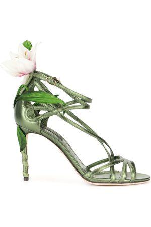 Dolce & Gabbana Women Sandals - Lily sandals