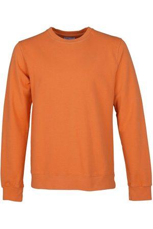 Colorful Standard Colourful Std Sweats Cst. cs1005 Buo. cs1005
