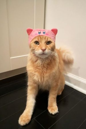 Urban Outfitters Kirby Cat Cap