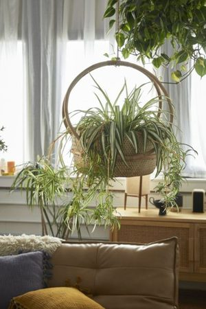"""Urban Outfitters Margot 7"""" Hanging Planter"""