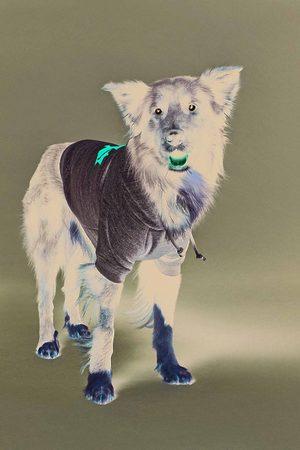 Dsquared2 Unisex Dogwear Grey