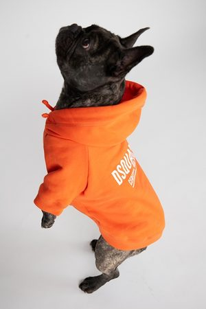 Dsquared2 Unisex Dogwear